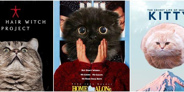 Kedileri Yücelten Film Posterleri!