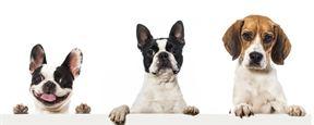 Dünya Köpekler Günü'nde Zac Efron'dan Duygusal Kutlama!