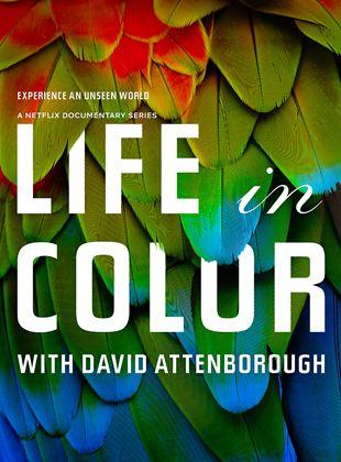 David Attenborough ile Yaşamın Renkleri